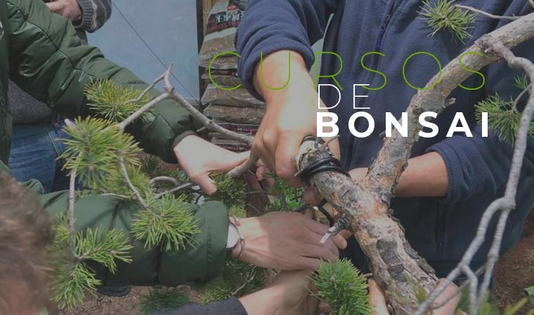 cursos-bonsai